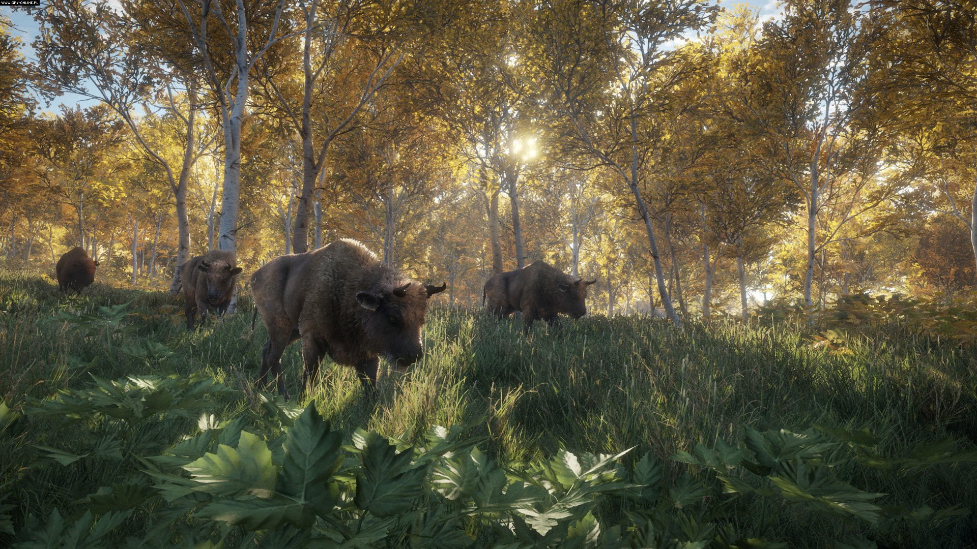 theHunter: Call of the Wild PC Games Image 63/63, Expansive Worlds, Avalanche Studios